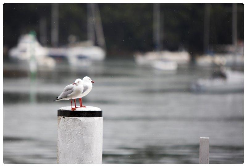 Sydney photographer_0755.jpg